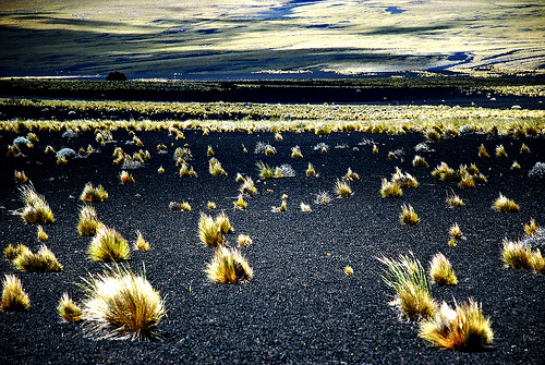 Pampa Negra, Payunia, Mendoza.